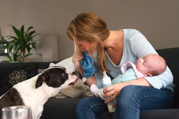 Фото №2 - Собака и малыш в одной квартире: правила безопасного общежития