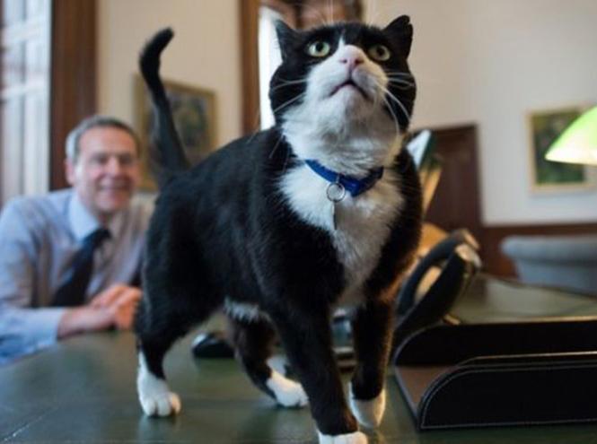 Фото №8 - Коты на службе Ее Величества