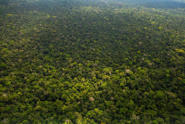 Фото №1 - Леса Амазонии начали выделять углекислый газ