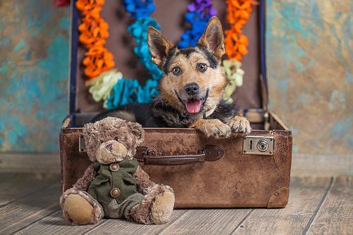 Фото №2 - Котопёс недели: возьми из приюта собаку Есению или кошку Долли