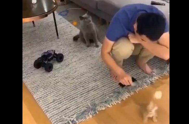 Фото №1 - Реакция кота на хозяина, играющего с другим котом, покорила Интернет (видео)