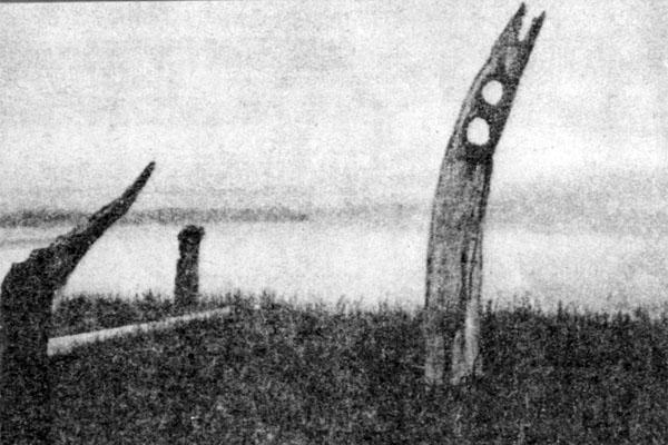 Фото №1 - Китовая аллея