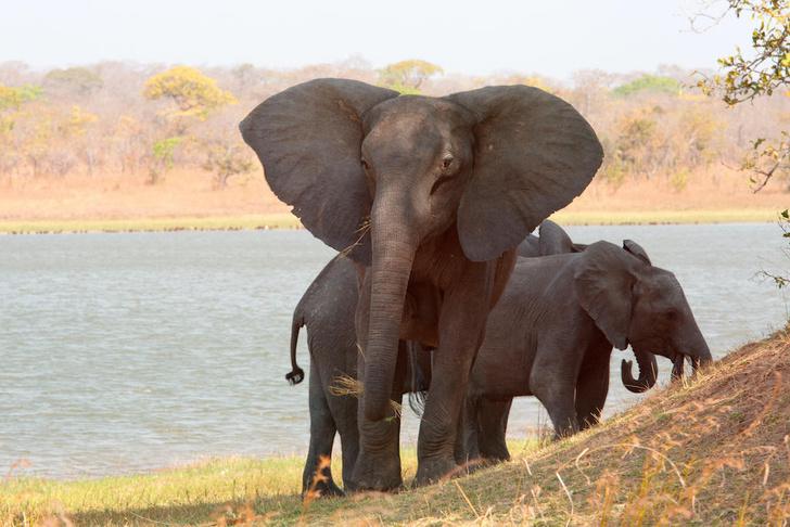 Фото №1 - Дикая природа Малави: как спасают и реабилитируют животных