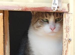 Фото №5 - Котопёс недели: собака Майна и кот Прапор ждут своих хозяев