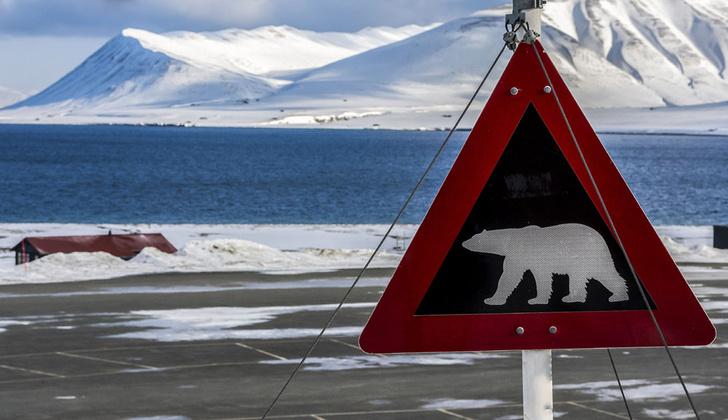 Фото №1 - Трое российских полярников окружены белыми медведями