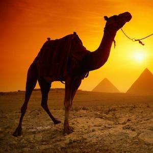Фото №1 - В гостиницах Египта мест нет