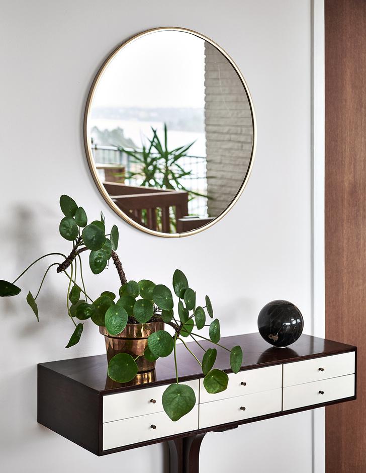 Фото №4 - Как освежить комнатные растения: 6 эффективных советов по уходу