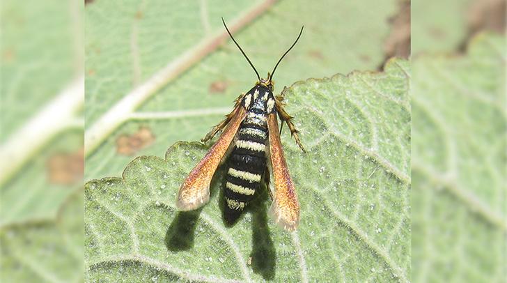Фото №1 - В Крыму обнаружили новый вид насекомых