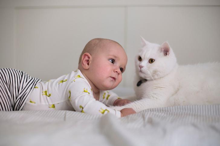 Ребенок и домашние животные, ребенок и кот в доме, ребенок и собака в доме