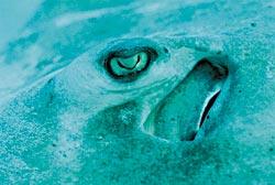 Фото №4 - Мушкетеры подводного царства