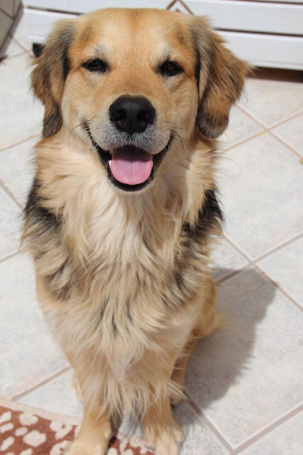 Фото №5 - Реальные собаки, которые выглядят как плохой фотошоп (много фото)
