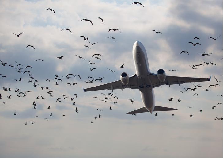 Фото №1 - Найден способ обезопасить самолеты от столкновений с птицами