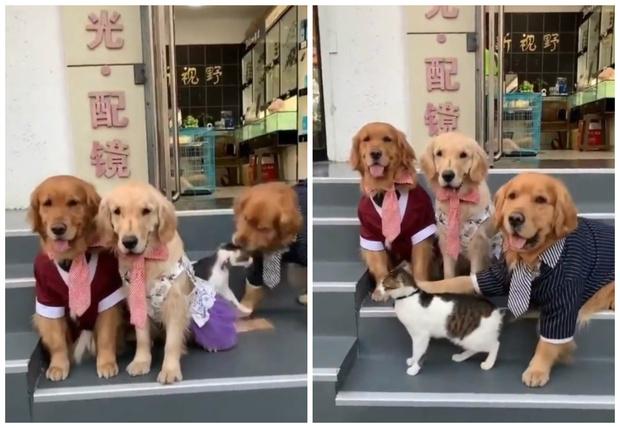 Фото №1 - Пес «строит» кота, чтобы получилась нормальная семейная фотография (видео)