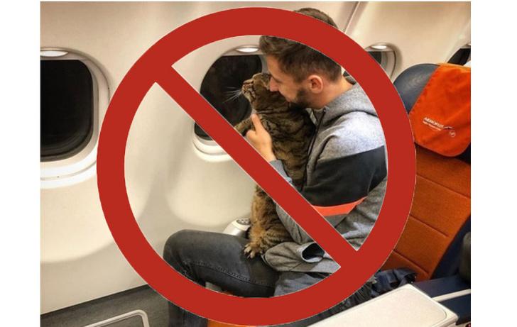 Фото №1 - Удручающее завершение истории россиянина, взявшего на борт самолета кота