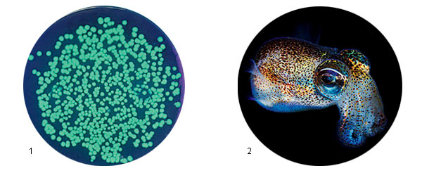 Фото №2 - «Бактерии не могут без общения»