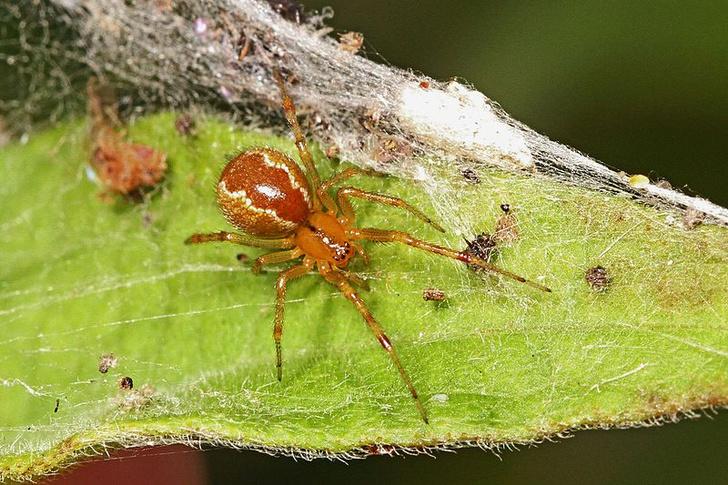Фото №1 - Штормы влияют на характер пауков