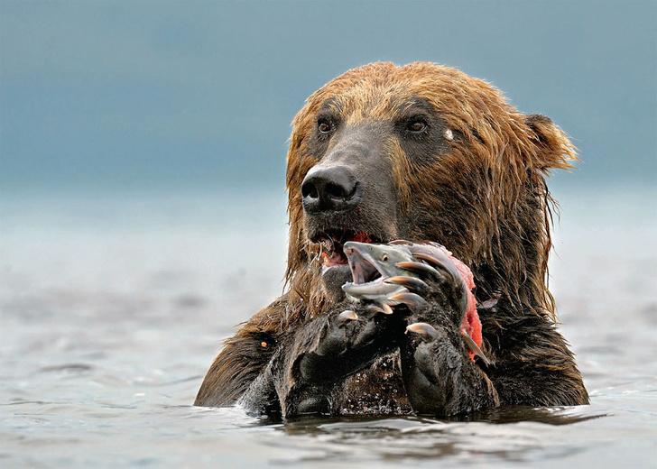 Фото №1 - Международный конкурс фотографий дикой природы «Золотая черепаха»