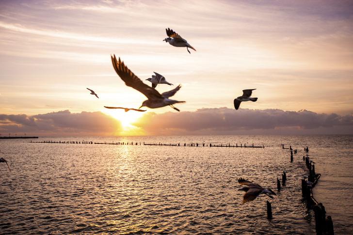 Фото №1 - Специалисты рассказали, почему птицы не седеют с возрастом