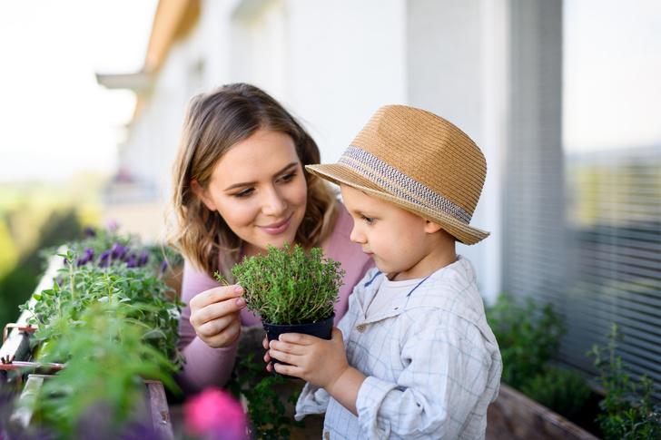 Фото №3 - Земляника, овощи и зелень— вкуснятина, которую легко вырастить на собственном подоконнике