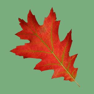 Фото №4 - Тест: Выбери осенний листок и узнай, с чем тебе придется расстаться в сентябре 🍂