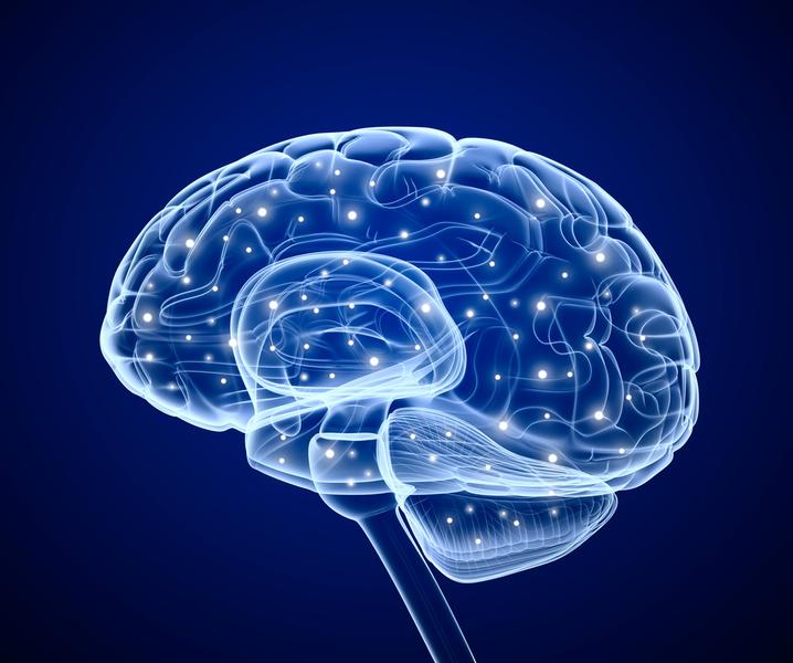 Фото №1 - Без тренировок мозг может «усохнуть»