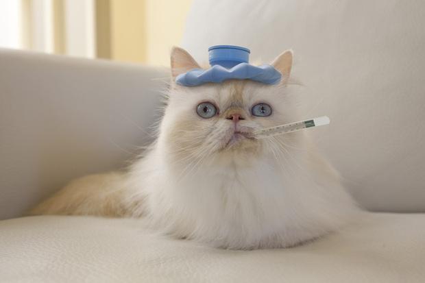 клизма кошке