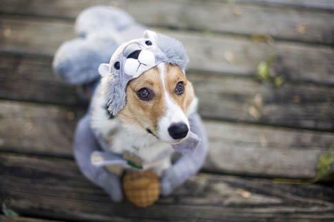 Фото №18 - Фотоподборка недели: собаки, которые уже готовы к Хэллоуину