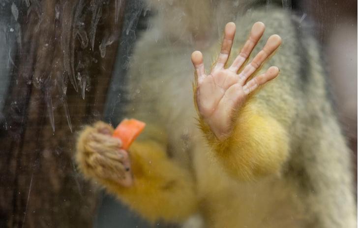 Фото №1 - Бороздки на пальцах обеспечили человеку эволюционное преимущество