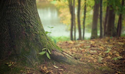 Фото №1 - В МЧС назвали категорию россиян, которая чаще всего теряется в лесу