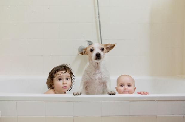 Фото №6 - 5 опасных заблуждений о дружбе ребенка и собаки