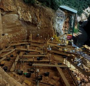 Фото №1 - Самый ранний европеец жил 1,2 млн лет назад