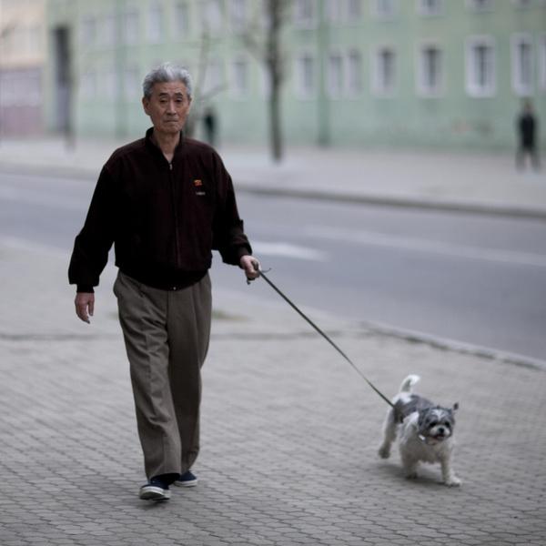 Фото №1 - «Загнивающий тренд»: Ким Чен Ын запретил гражданам Северной Кореи заводить собак
