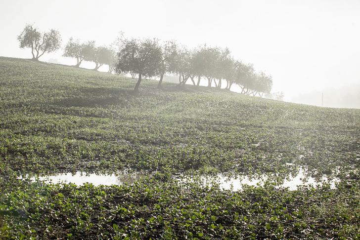Фото №1 - Найдено старейшее в Италии оливковое масло