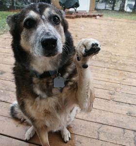 Фото №1 - Эстонским собакам вживят микрочипы
