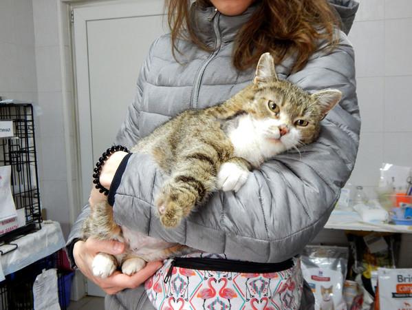 Фото №2 - Котопёс недели: кошка Пелагея и пес Феня