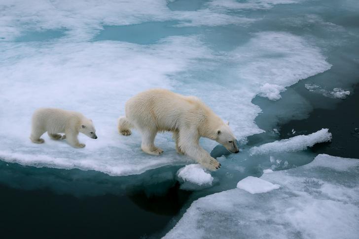 Фото №1 - Зафиксирован рекордный минимум площади ледового покрова Арктики
