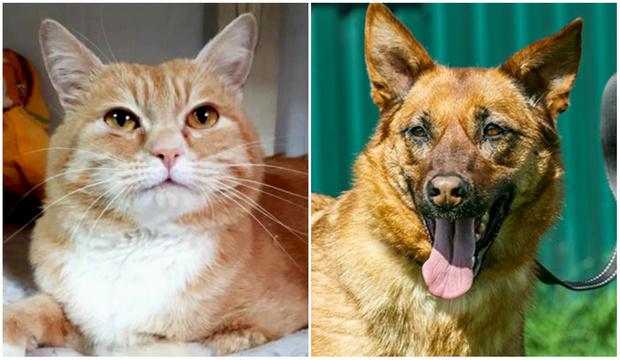 Фото №1 - Котопёс недели: кот Шурик и собака Василиса