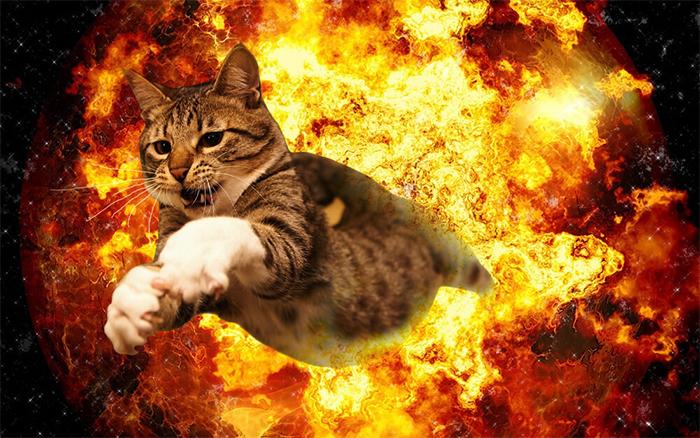 Фото №3 - 20 мемных котов, похожих на известных режиссеров