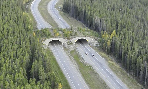 Фото №7 - 15 самых-самых мостов