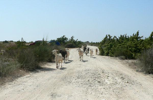 Фото №5 - Корфу, козы, серпантин