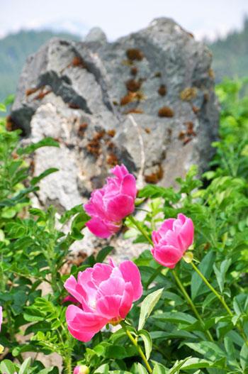Фото №1 - Август: цветущая Аляска
