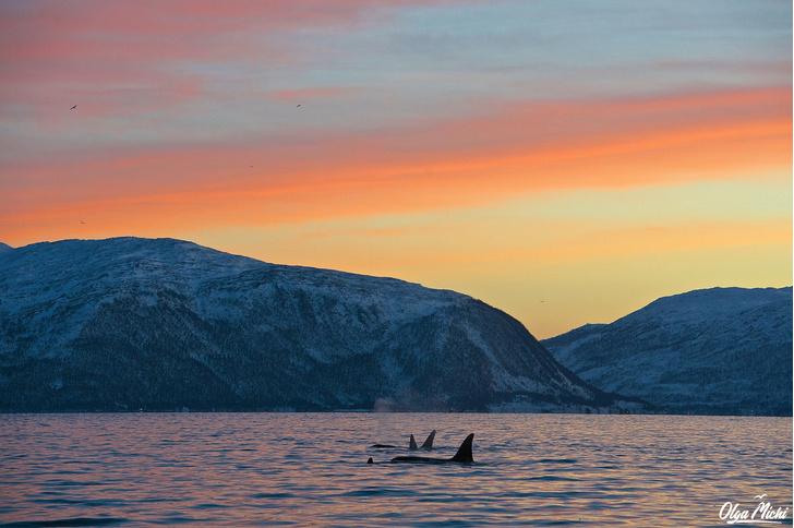 Фото №4 - Дивный север Норвегии