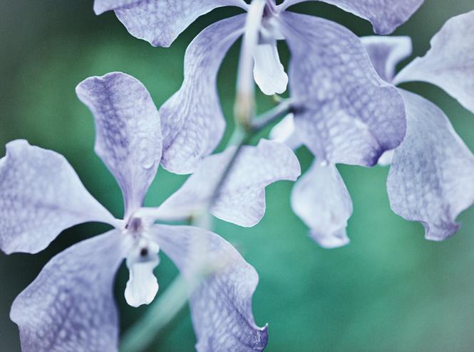 Фото №3 - Самые дорогие косметические средства: Orchidee Imperiale от Guerlain
