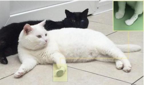 Фото №1 - Российские ученые «поставили на лапы» котов-инвалидов