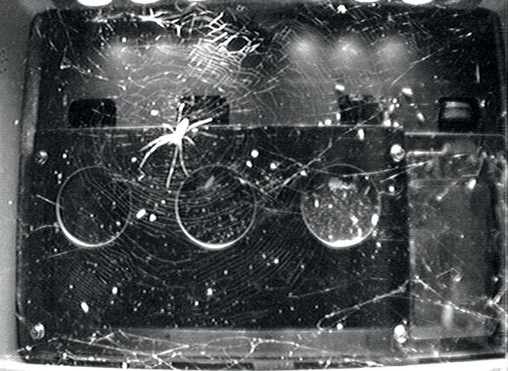 Фото №1 - Игры разума: в сетях космической паутины