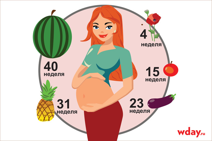 Фото №1 - Из зернышка в арбузик: как растет плод неделя за неделей