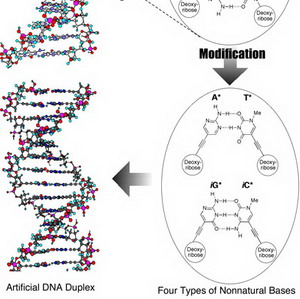 Фото №1 - Создана искусственная ДНК
