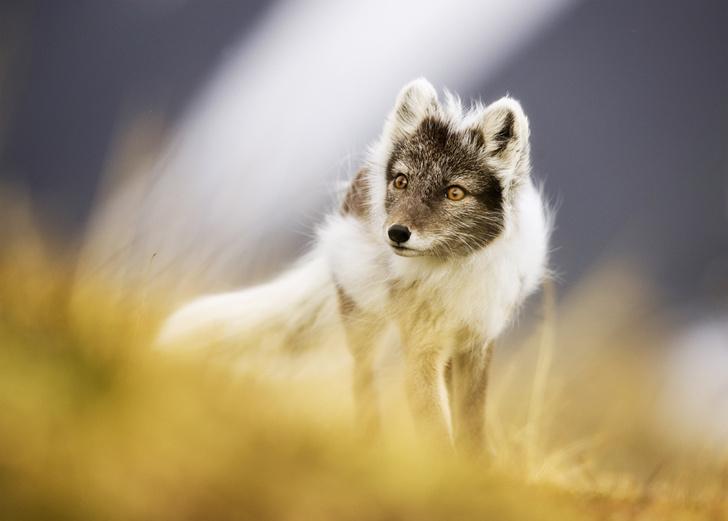 Фото №1 - Зоология: На широкую лапу
