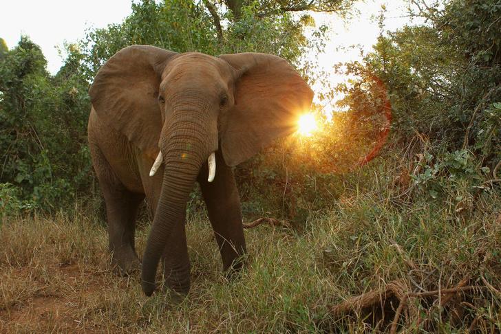 Фото №4 - Гиганты планеты: самые большие животные, которые сейчас живут на свете