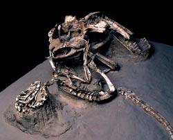 Фото №7 - Вооружение эпохи динозавров